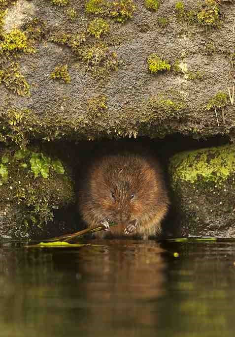 Water Vole survey Winchester
