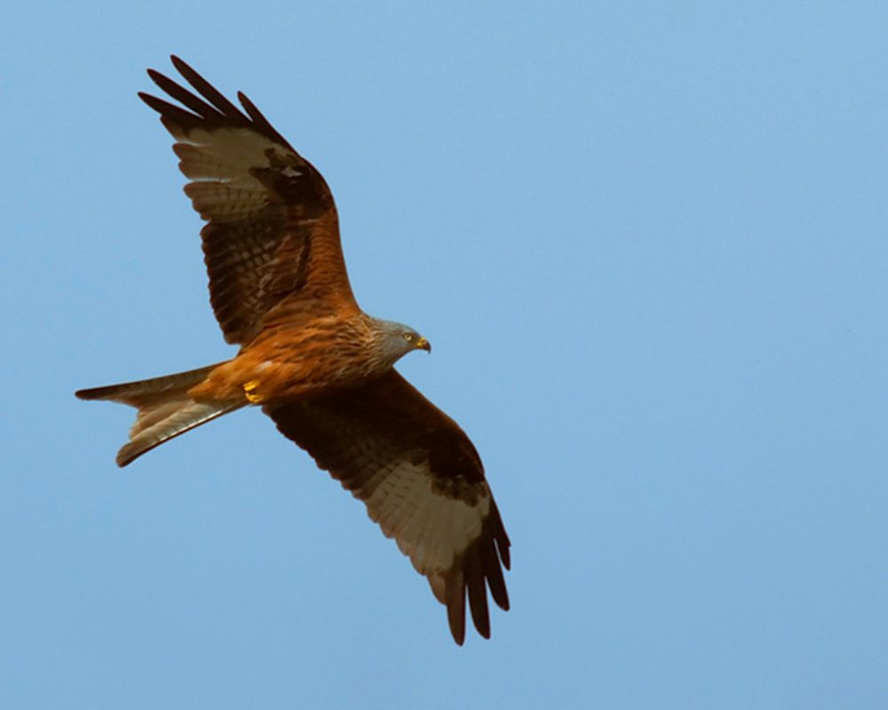 Breeding, wintering and vantage-point bird surveys